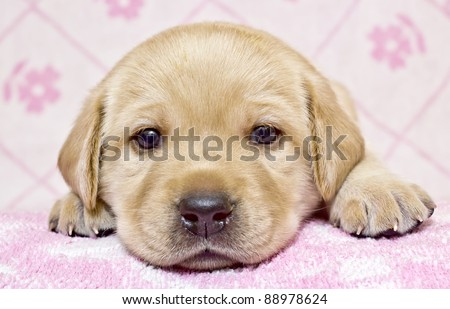 Close-up of little puppy