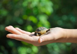 Close up of  little turtle on the palm of girl