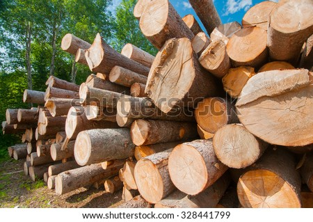 Close up of logs stacked at lumber mill in Ontario, Canada