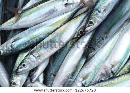 Close-up of mackerels at the market