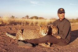 Close-up of man hugging and cuddling two Cheetahs in Namibia. Rescued Cheetah in sanctuary gently held by one guy with yellow grass in the background.