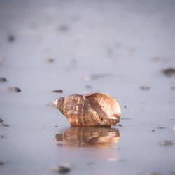 Close-up of marine snail shell in the seashore.