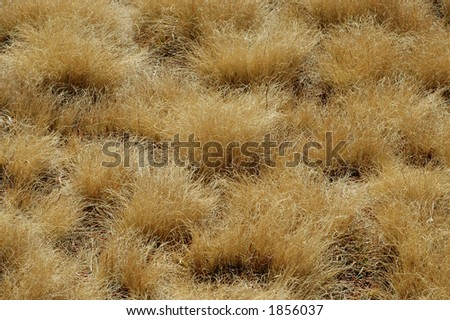 Close-up of meadow grass.