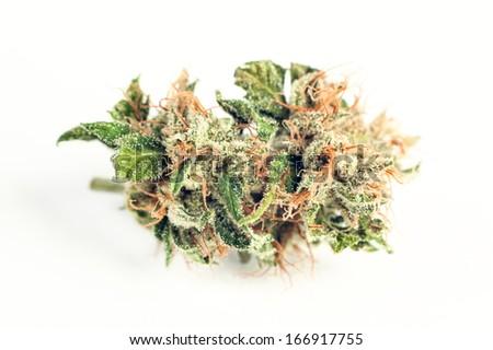 close up of medical marijuana in special handling