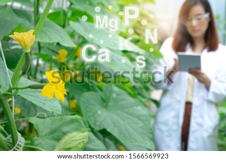Close up of melon flowers and researcher woman in white uniform in  background, selective focus, and fertilizer graphic, science and research concept