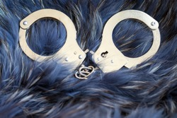 Close-up of metal handcuffs lying on blue and silver Fox fur. Concept of illegal production, forgery and smuggling of fur products and clothing. Social movement to protect animals
