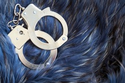 Close-up of metal handcuffs lying on blue and silver fox fur. Concept of illegal production and smuggling of fur products and clothing. Fake expensive types of fur coats. Crime and criminal liability