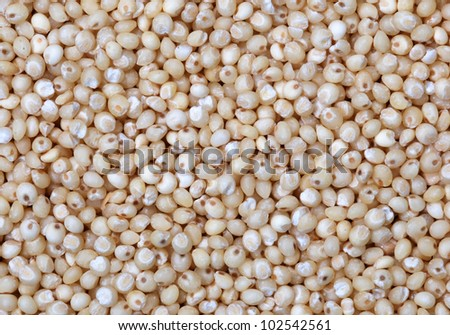Close up of millet grain