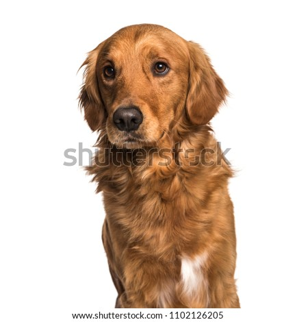 Close-up of Mixed-breed dog, isolated #1102126205