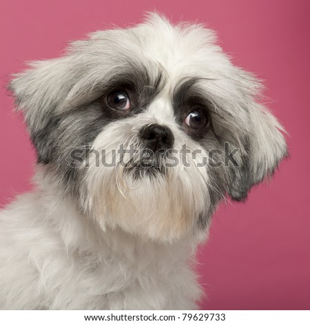 Close-up of Mixed-breed dog, 1 year old, in front of pink background