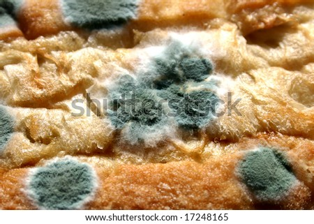 Close up of mold growing on Bread Roll