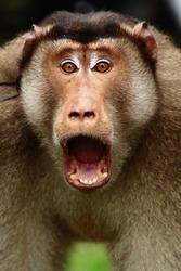 close up of monkey