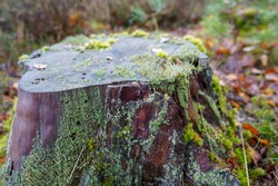 Close up of moss growing on a tree stump