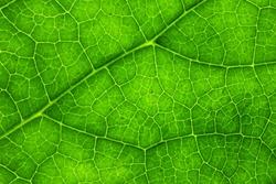 Close Up Of Natural Leaf Pattern.