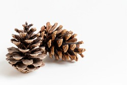 close up of natural two pinecones in brown color for decoration isolated on white background with copy space.