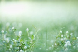 Close up of nature view mini white flower and grass on blurred green leaf background under sunlight with bokeh and copy space using as background natural plants landscape, ecology wallpaper concept.