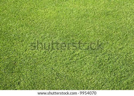 Close up of neat cut grass on a bowling green.