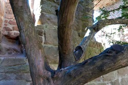 close up of old tree in a castle ruin