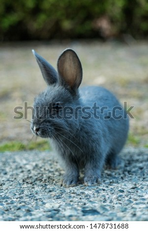 Wild rabbit sitting on?gravel Images and Stock Photos