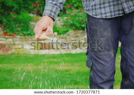 close-up of one man farmer is fertilizing the lawn soil. male hand of worker, Fertilizer For Lawns in springtime for the perfect lawn. lawn fertilizer in man's hand on garden background.