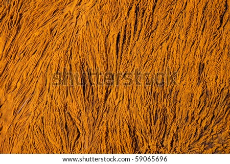 Close up of orange algae in yellowstone NP - stock photo