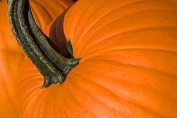 Close-up of orange autumn pumpkin