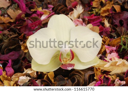 Close up of orchid with potpourri