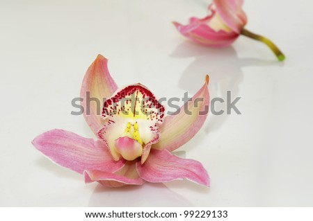Close-up of orchids with reflection..