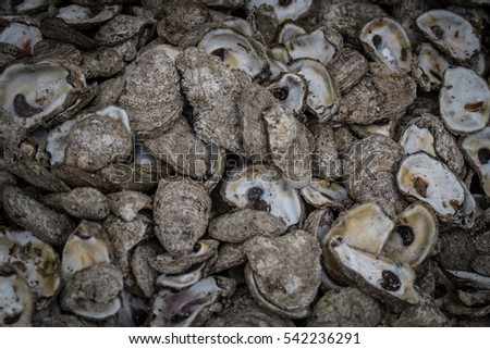 Close up of Oyster Shells across entire image