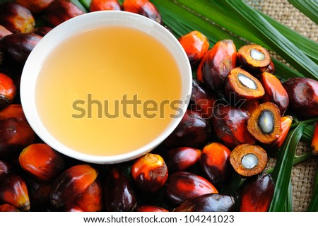 Close up of Palm Oil fruits, Cooking Oil and Leaf.