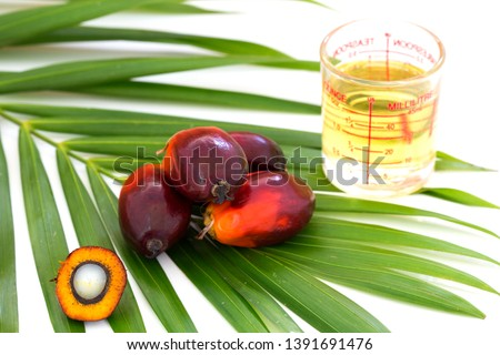 Close up of Palm Oil fruits with cooking oil and palm leaf isolated on white background, Thailand.