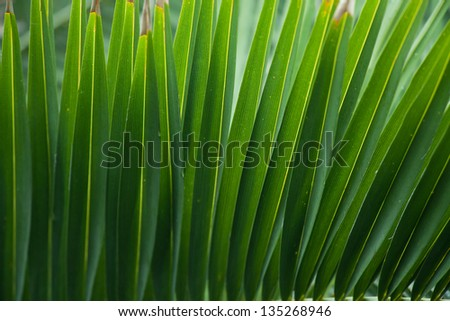 Close-up of palm tree leaf