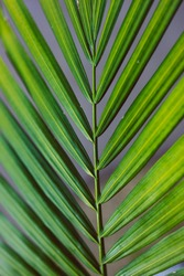 close-up of palm tree leaf outdoor in sunny backyard shot at shallow depth of field