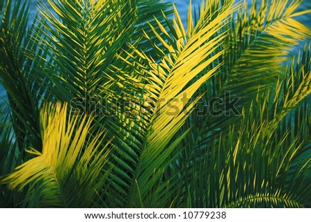 Close-up of palm-tree leaves in the sunset
