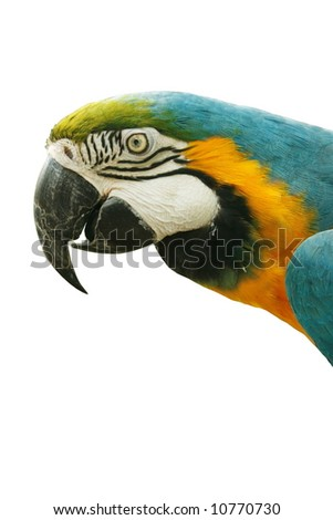 Close-up of parrot bird isolated on white background