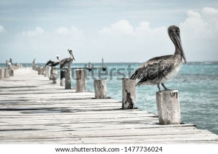 Close-up of pelicans standing on pole of pier by the sea