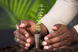 Close-up Of Person's Hand Protecting Sapling On Stacked Coins