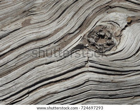 close up of petrified wood #724697293
