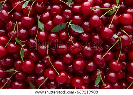 Close up of pile of ripe cherries with stalks and leaves. Large collection of fresh red cherries. Ripe cherries background.  #669119908