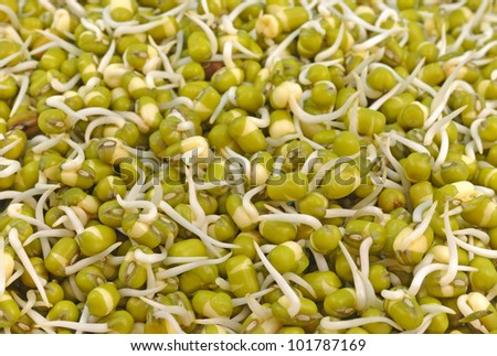 close up of pile of sprouted seeds of green gram - stock photo