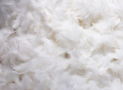 Close-Up of Pile of White Fluffy Feathers