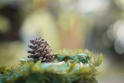 Close up of pine cones in nest in the forest.Selective focus.