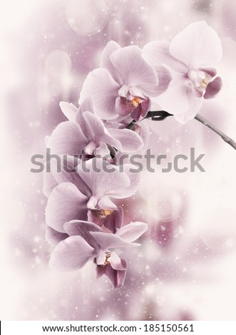 close up of pink orchids on...
