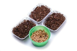 Close-up of plastic containers for fishing with a worm and a fly maggot. Topic: bait for fish pike, trout, asp, pike perch, grayling, carp, perch, carp, eel, roach, bleak, crucian carp, gudgeon, bream