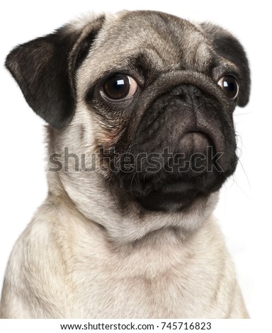 Close-up of Pug puppy, 3 months old, in front of white background #745716823