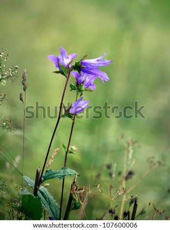 Close up of purple bell flower on green background