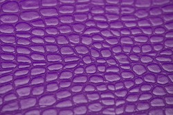 Close up of Purple Crocodile,Alligator belly skin texture use for wallpaper background.Luxury Design pattern for Business and Fashion.Top view surface in backdrop.