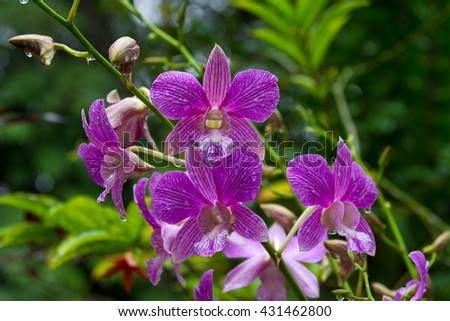 Shutterstock Close up of purple orchid.