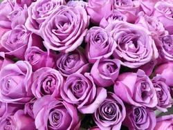 Close up of purple roses flower bouquet.