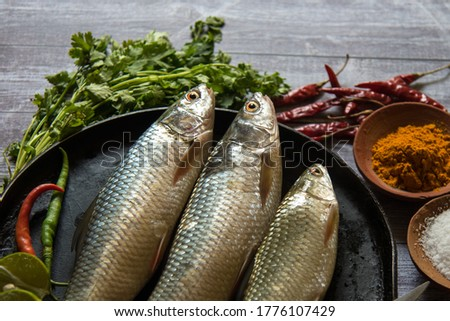 Close up of raw fish on a background with use of selective focus on a particular part of the fish, with rest of the fish, the other fishes, all other ingredients and condiments blurred.